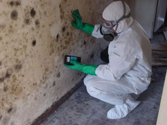 Mold Removal in Votaw TX