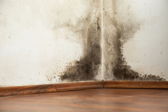 Mold Removal in North Houston TX