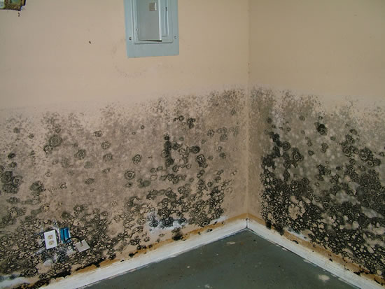 Mold Removal in Wallis TX