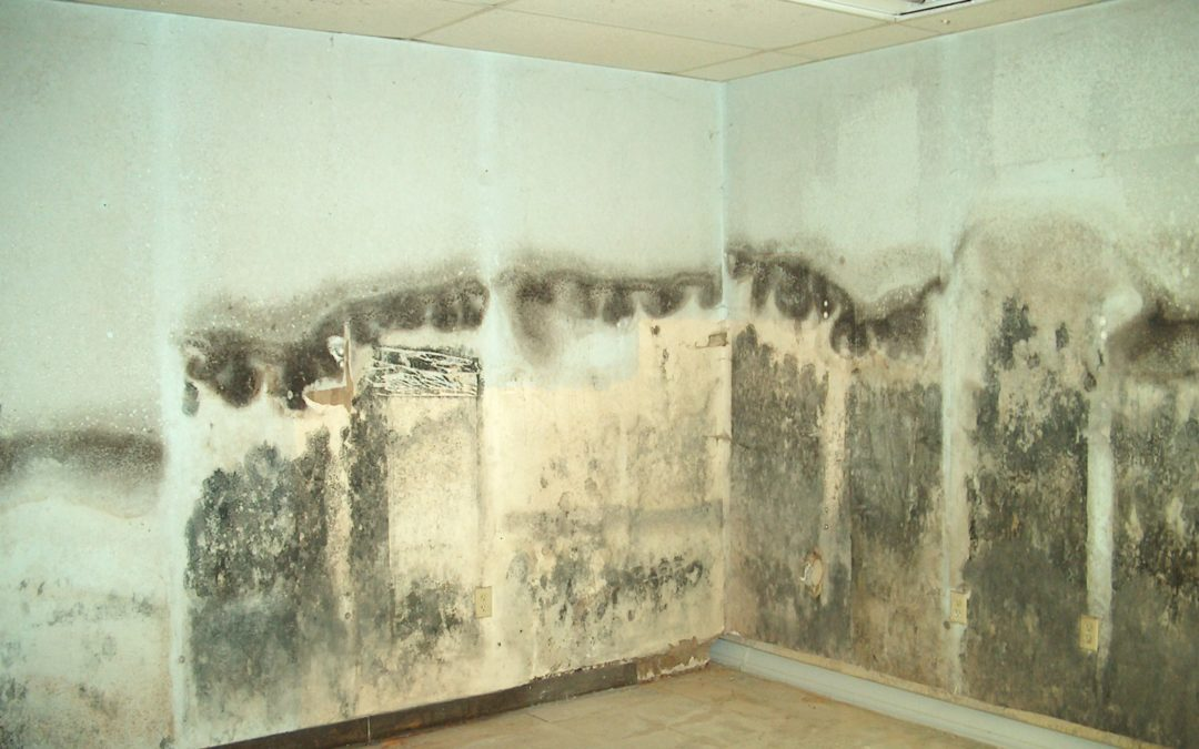 Mold Removal in Pattison TX
