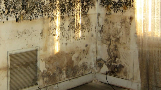 Mold Removal in Washington TX