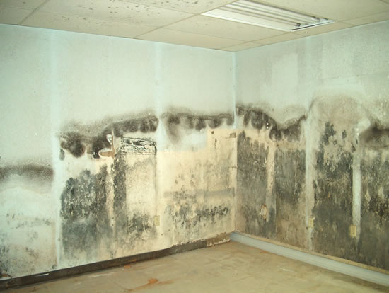 Mold Removal in Daisetta TX